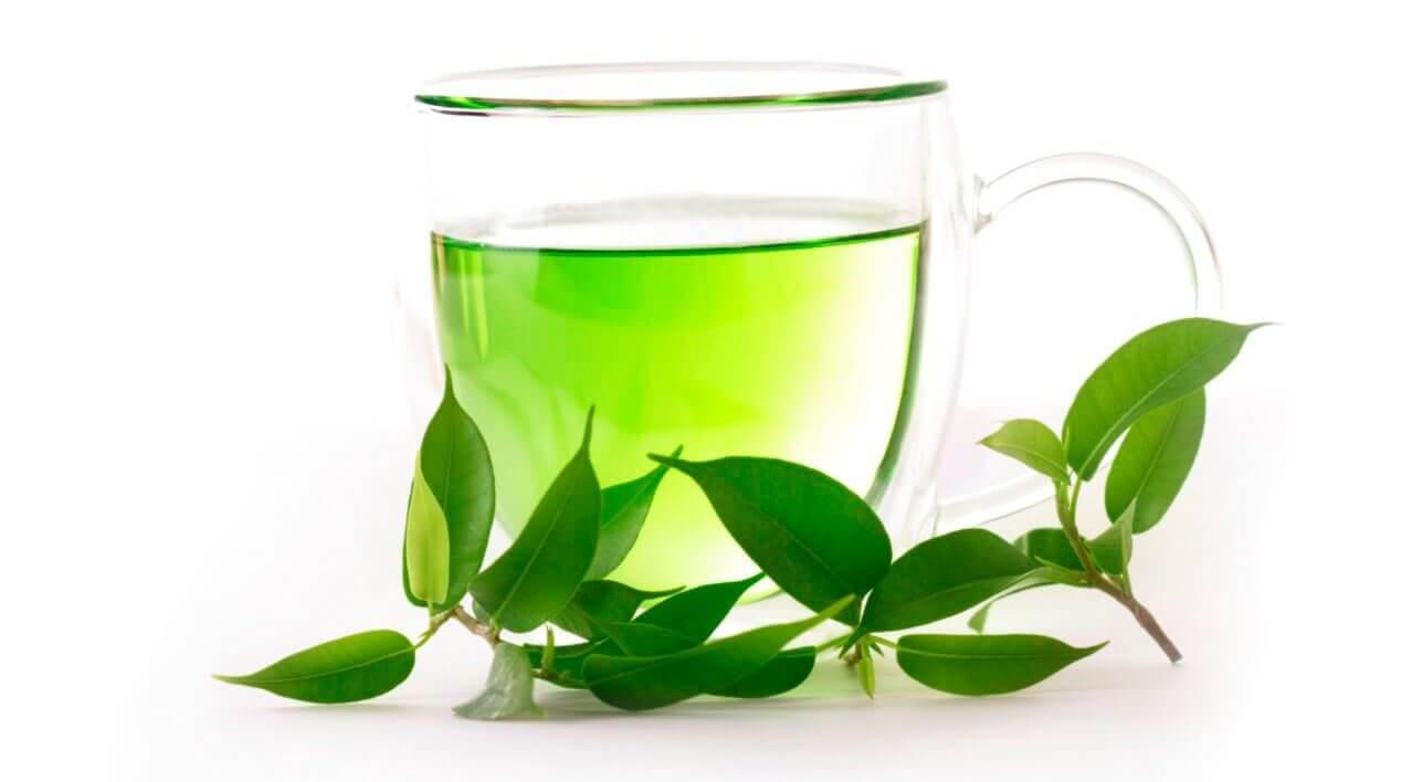 תה ירוק וצמח הקמליה הסינית