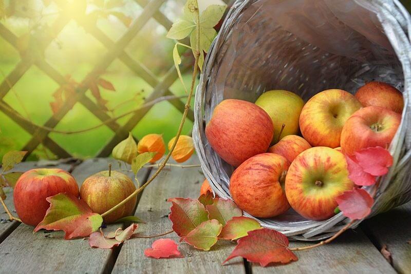 תפוחים - יתרונות בריאותיים רבים
